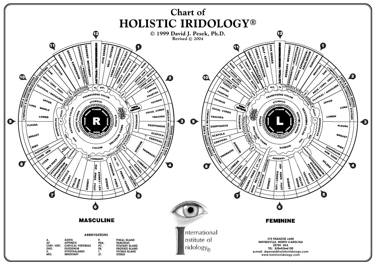 Healing with iridology science of iridology diagnosis through the eyes geenschuldenfo Choice Image